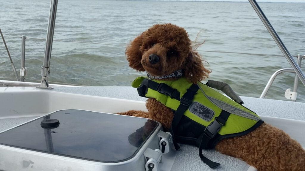 dog on sailboat
